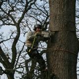 Pro Grind Stump Removal