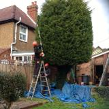 Rhino Property Maintenance & Garden Maintenance