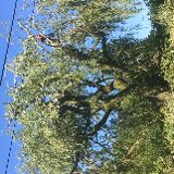 woodward tree surgeons