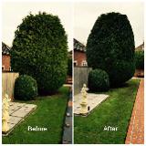 D.J tree & garden services