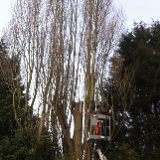 Tree Surgeons Nottingham