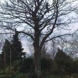 TreeWork Scotland Ltd