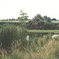 Wild life pond with wild meadow
