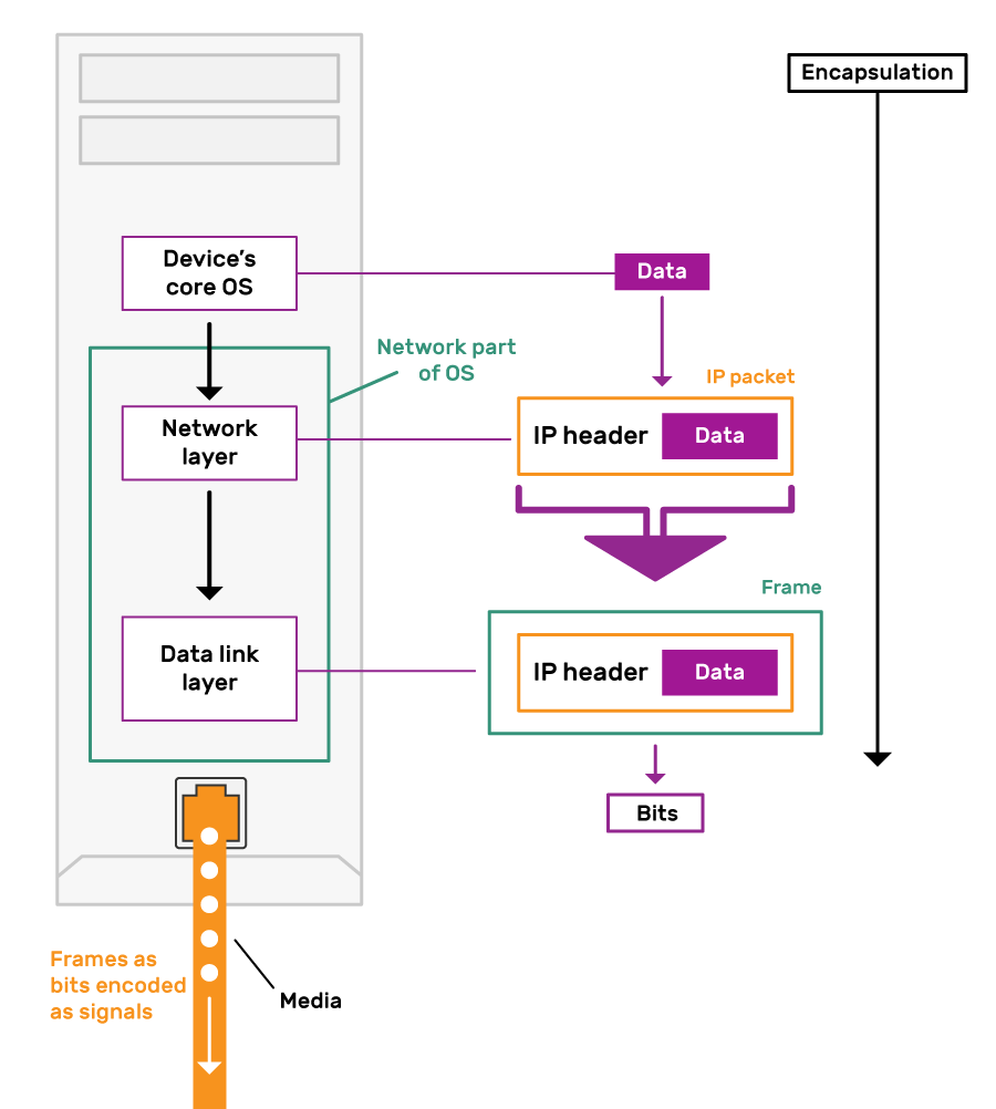 Diagram showing encapsulation of Data as it travels from device's core OS. At the Network layer it is encapsulated in an IP packet with an IP header. At the Data link layer this IP packet is encapsulated into a Frame. This bits that make up this frame are encoded as signals onto the network media.