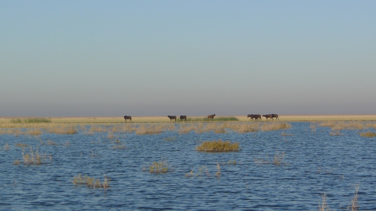 Southern Iraq- Marshes (10)
