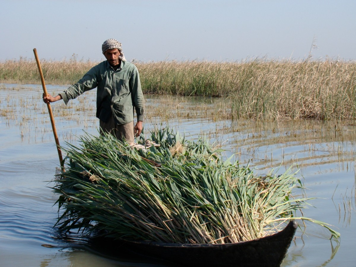 Southern Iraq- Marshes (7)