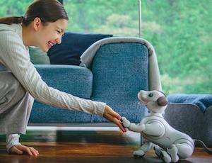 Aibo Robot docile