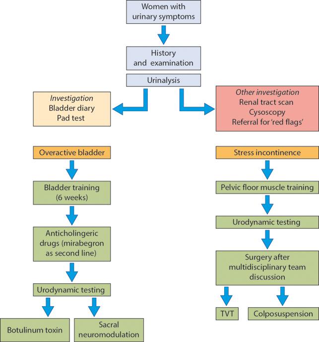 Figure 10.3 Flowchart of patient management (based upon UK NICE guidance). (TVT, tension-free vaginal tape.)
