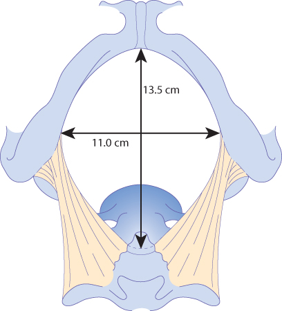 Figure 12.4 The pelvic outlet.