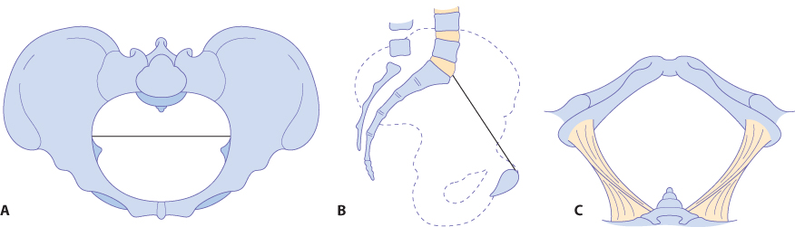 Figure 12.8 The platypelloid pelvis: (A) brim; (B) lateral view; (C) outlet.