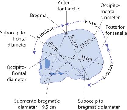 Figure 12.13 The diameters of the fetal skull.