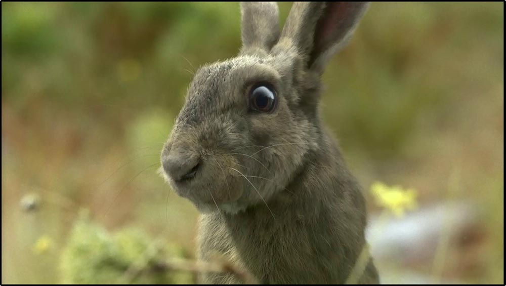 Figure 6.43 A CGI rabbit is almost indistinguishable from a photograph of one in this Travelers commercial.