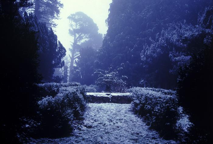the arboretum in winter
