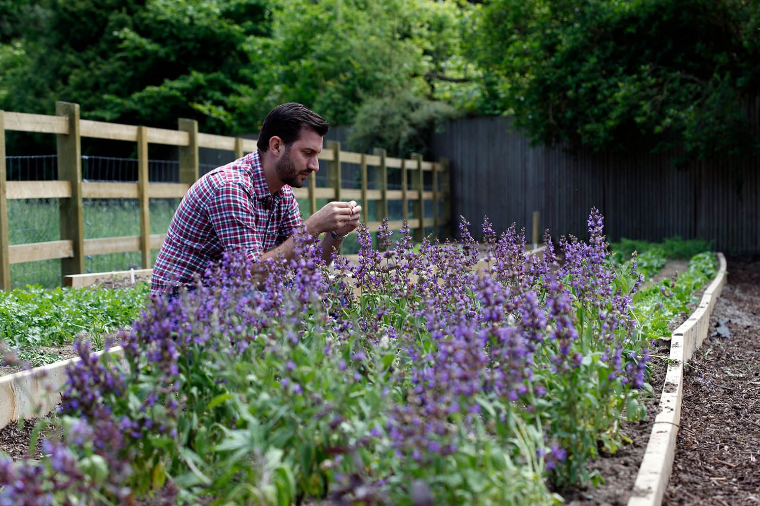 Mark Sargeant in the herb garden