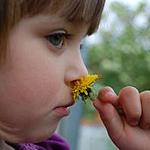 Child Friendly Restaurants in Sheffield