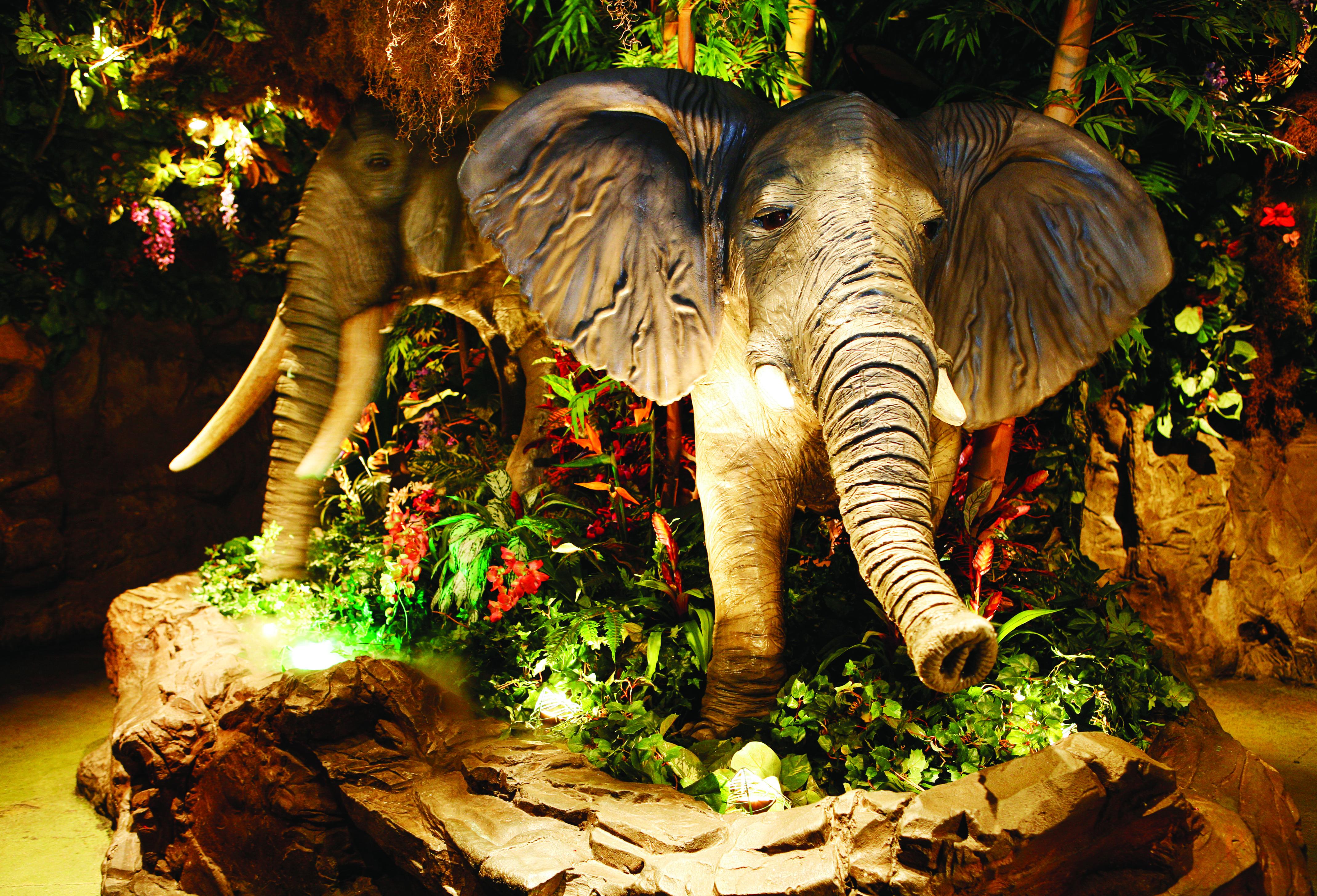 Rainforest Cafe Animal Kingdom Phone
