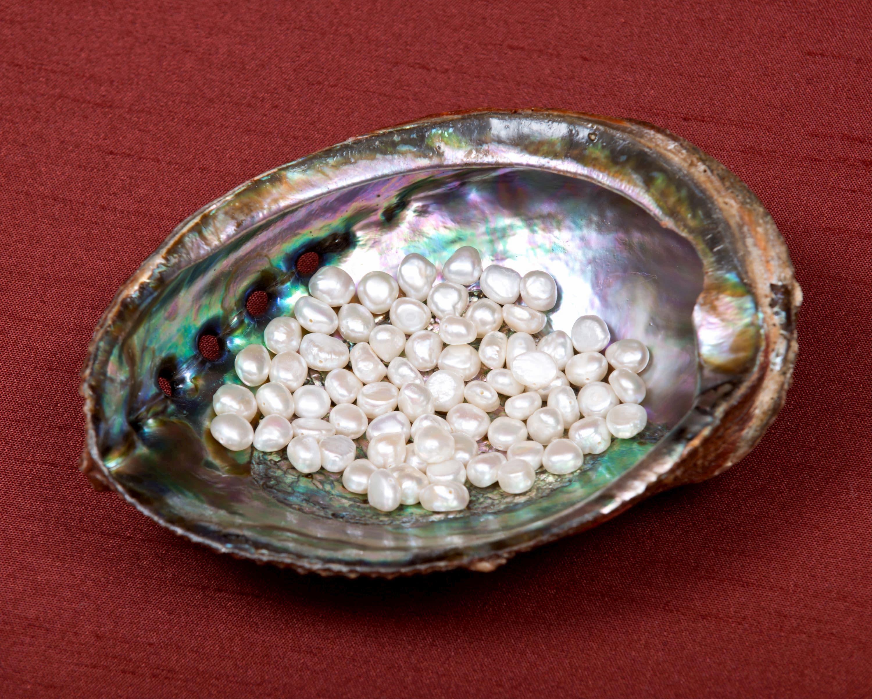 Weiße Süßwasserperlen in Abalonemuschel