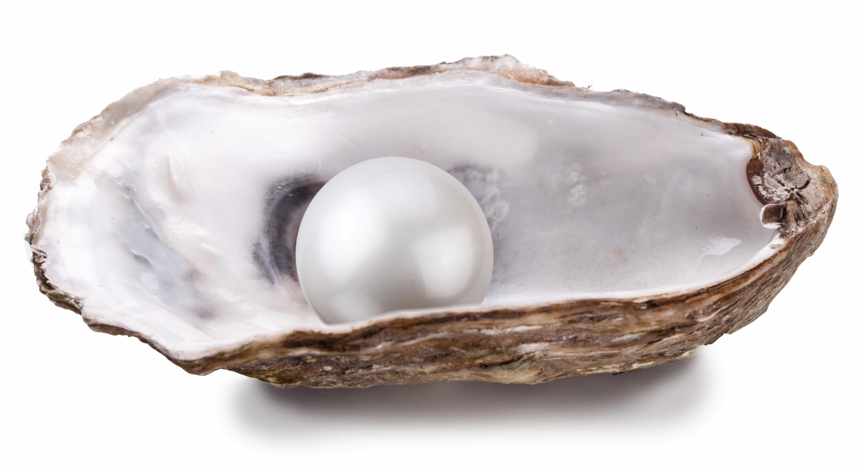 Oyster with isolated white pearl