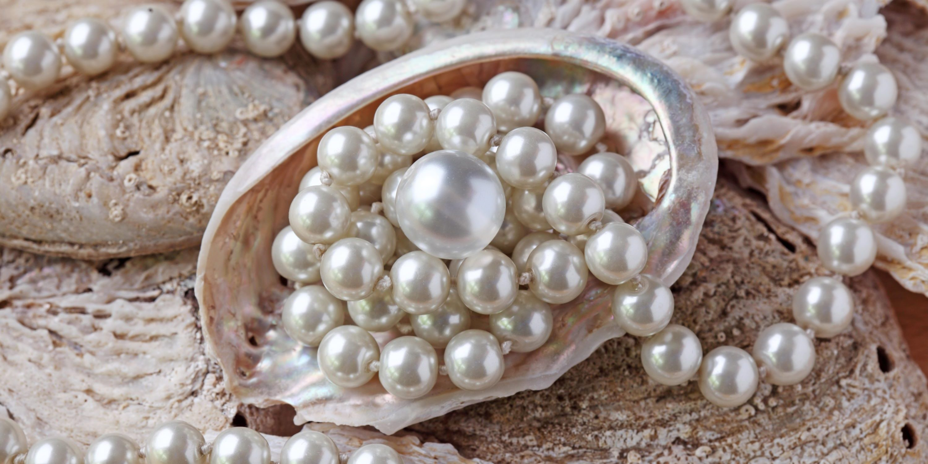 Pearls and pearl necklace in a mollusk