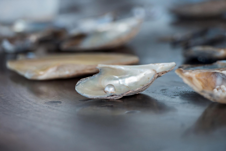 Pearl breeding at the beach