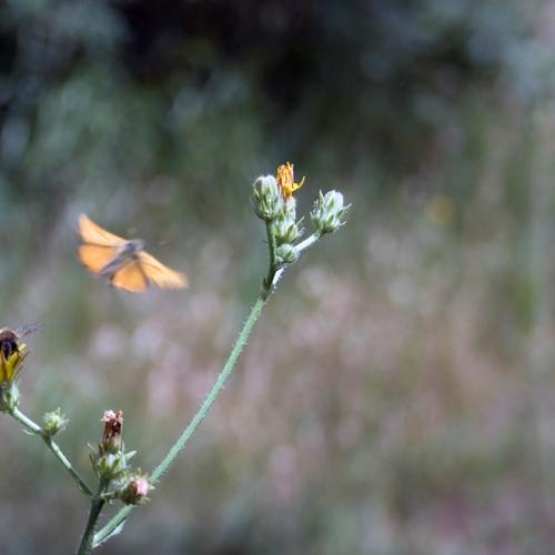 Kelebek uçarken