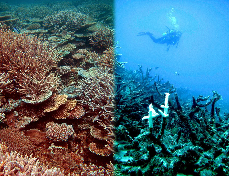 Nous assistons à la mort des mers et à la disparition du corail
