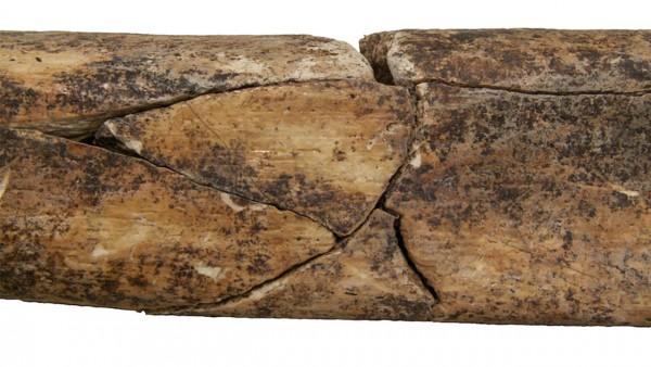 Archéologie : Découverte d'un massacre datant du Néolithique en Europe