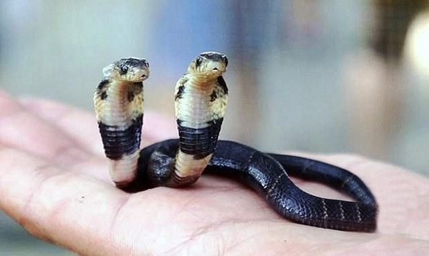Un serpent à 2 têtes découvert en Chine