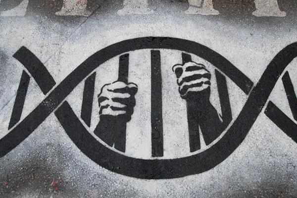 L'Australie interdit le brevetage des gènes