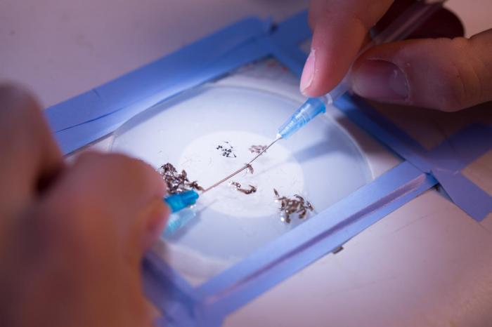 Paludisme : une nouvelle découverte sur l'invasion du foie par le parasite