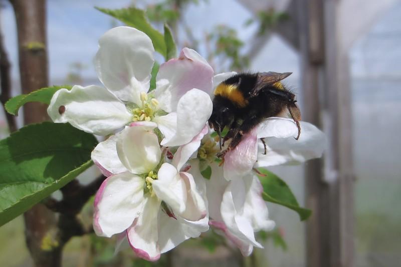Première preuve de l'impact du pesticide dans la pollinisation des abeilles