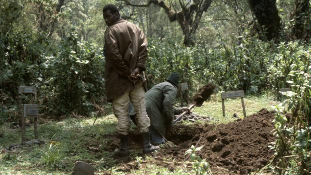 Un autre gorille mort du braconnage