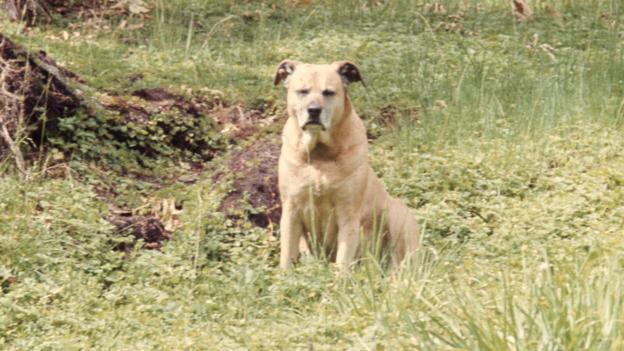 Cin-dy, la chienne de Diane Fossey en 1977