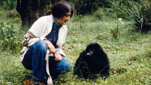 Diane Fossey était la plus heureuse quand elle était avec les gorilles