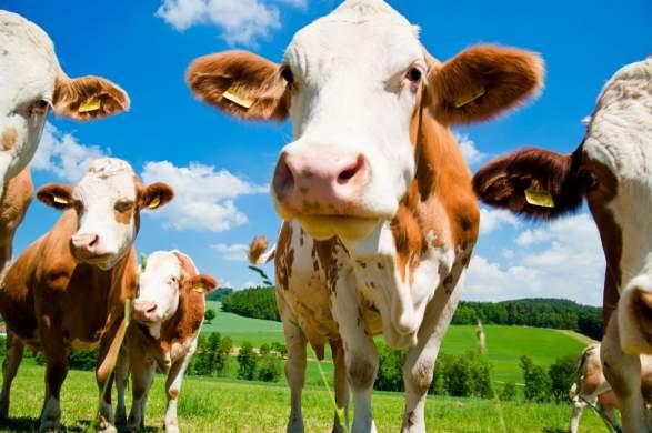La Chine construit une usine de clonage d'animaux