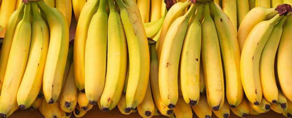 La maladie de Panama menace d'éradiquer la plus populaire des espèces de banane qui est la Cavendish