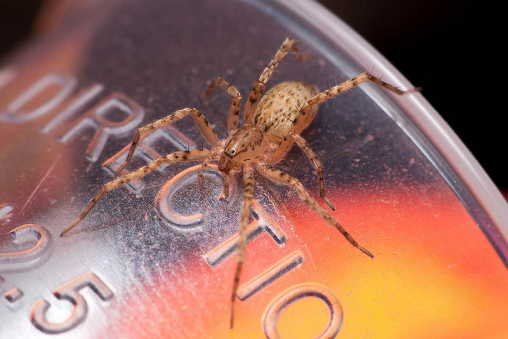 Les insectes qui habitent dans votre maison