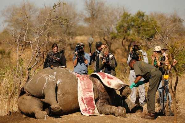L'année 2015 a été la pire année pour le braconnage de rhinocéros