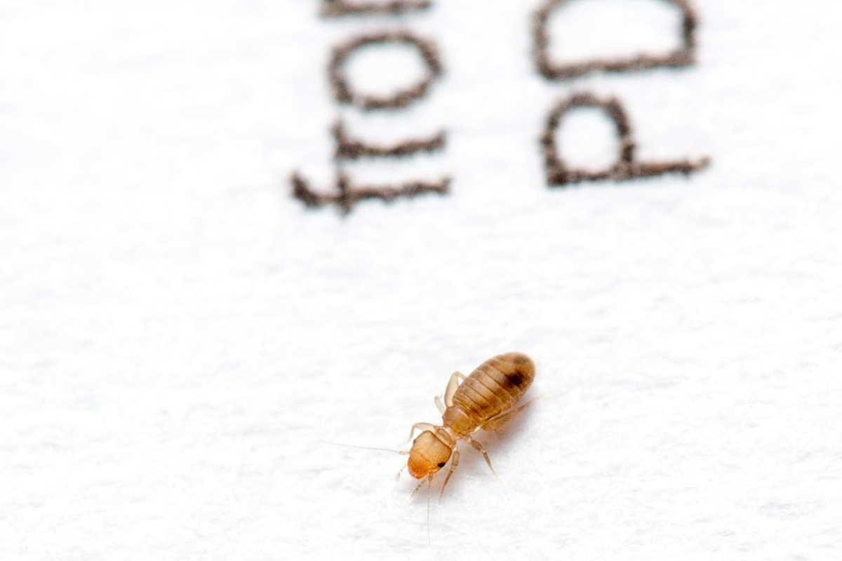 Votre maison est une jungle habit e par 100 esp ces - Eliminer les mouches dans la maison ...