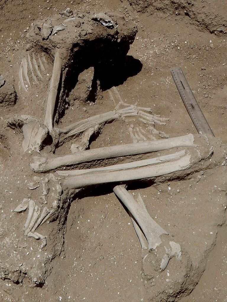 Découverte d'un massacre datant de 10 000 ans à Nataruk au Kenya