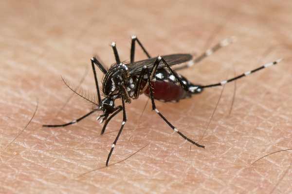 Un dossier pour comprendre l'histoire du virus Zika