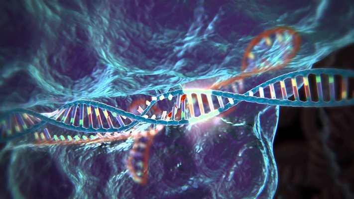 Les scientifiques au Royaume-Uni obtiennent l'autorisation d'utiliser la modification génétique sur des embryons humains
