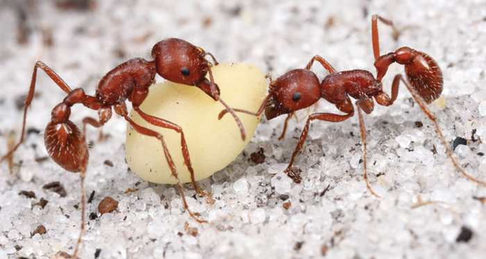 Les fourmis ouvrières sont des architectes énigmatiques et infatigables