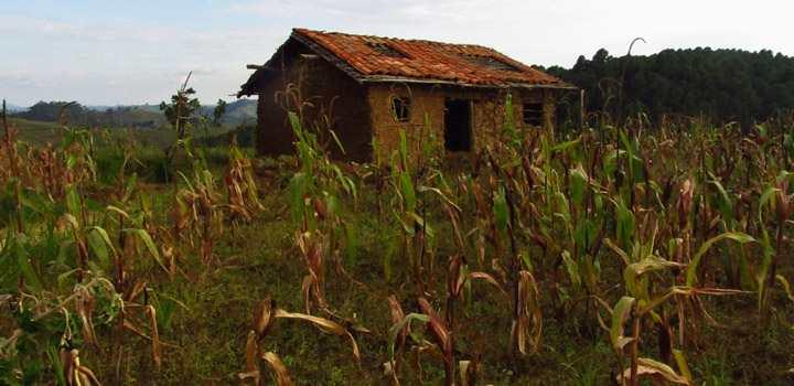 Les nouvelles politiques agricoles en Afrique initiées par les donateurs, le FMI et les multinationales nuisent principalement aux plus pauvres.