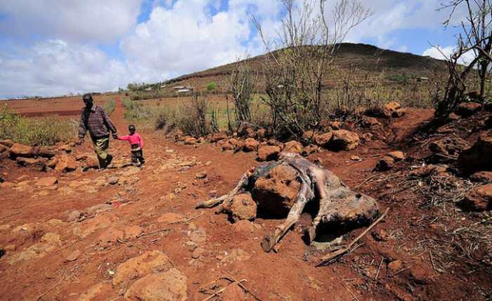 Famine à Madagascar : Premières victimes dans la région Androy - Actualité Houssenia Writing