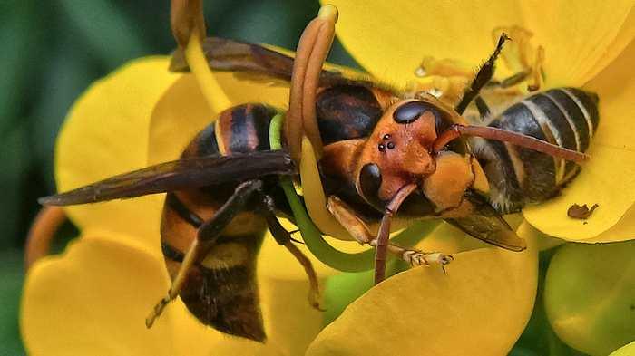 Le système d'alarme sophistiqué des abeilles