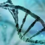 Nous transportons tous des gènes de l'autisme selon une étude internationale