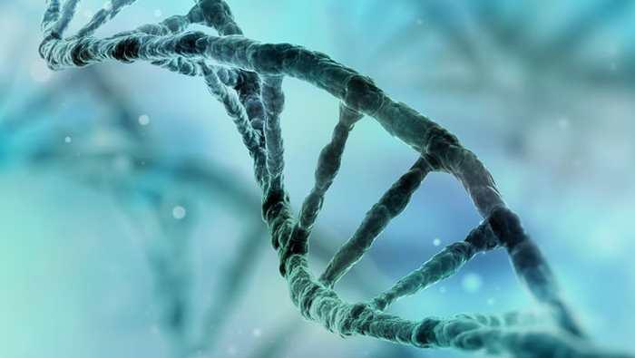 Nous avons tous des gènes de l'autisme
