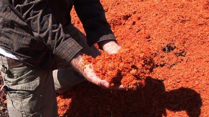 Générer de l'électricité à partir de tomates pourries