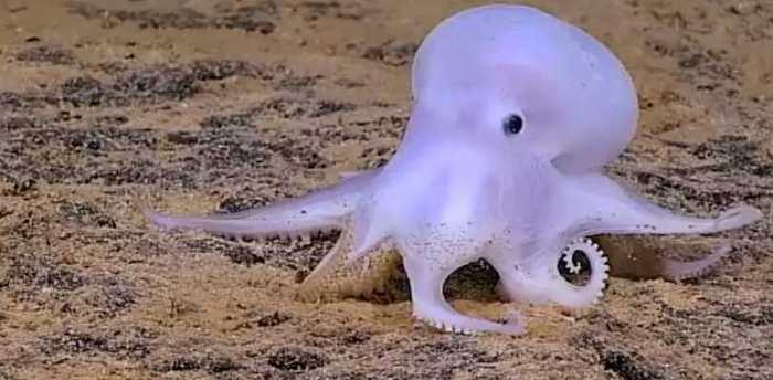 Des formes de vie inconnues découvertes par une expédition en eau profonde